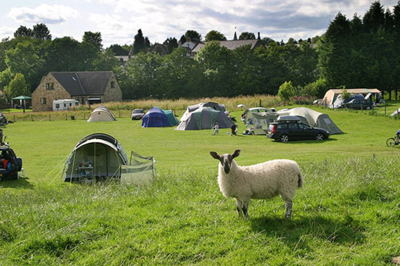 A view of the Demesne Farm campsite, photobombed by a sheep.