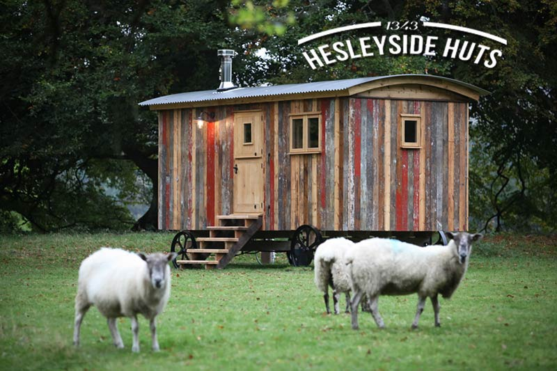 Rustic cabin accommodation surrounded by sheep