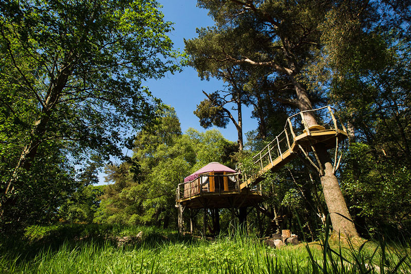 The treehouse yurt